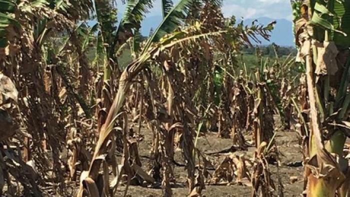 Extreme-droogte-in-de-Dominicaanse-Republiek