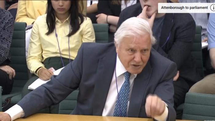 David Attenborough youtube