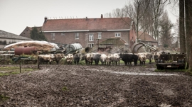 HDS152 Waterhoeve Tim Van de Velde