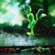 IPCC bloom-tn