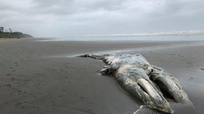 Hittegolven in de oceaan hebben desastreuze gevolgen