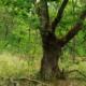 Groene Delle knoteik 200603 DSC05089_169