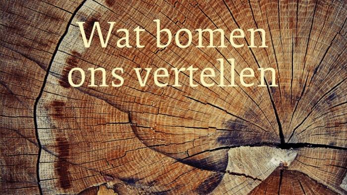 Wat-bomen-ons-vertellen_169