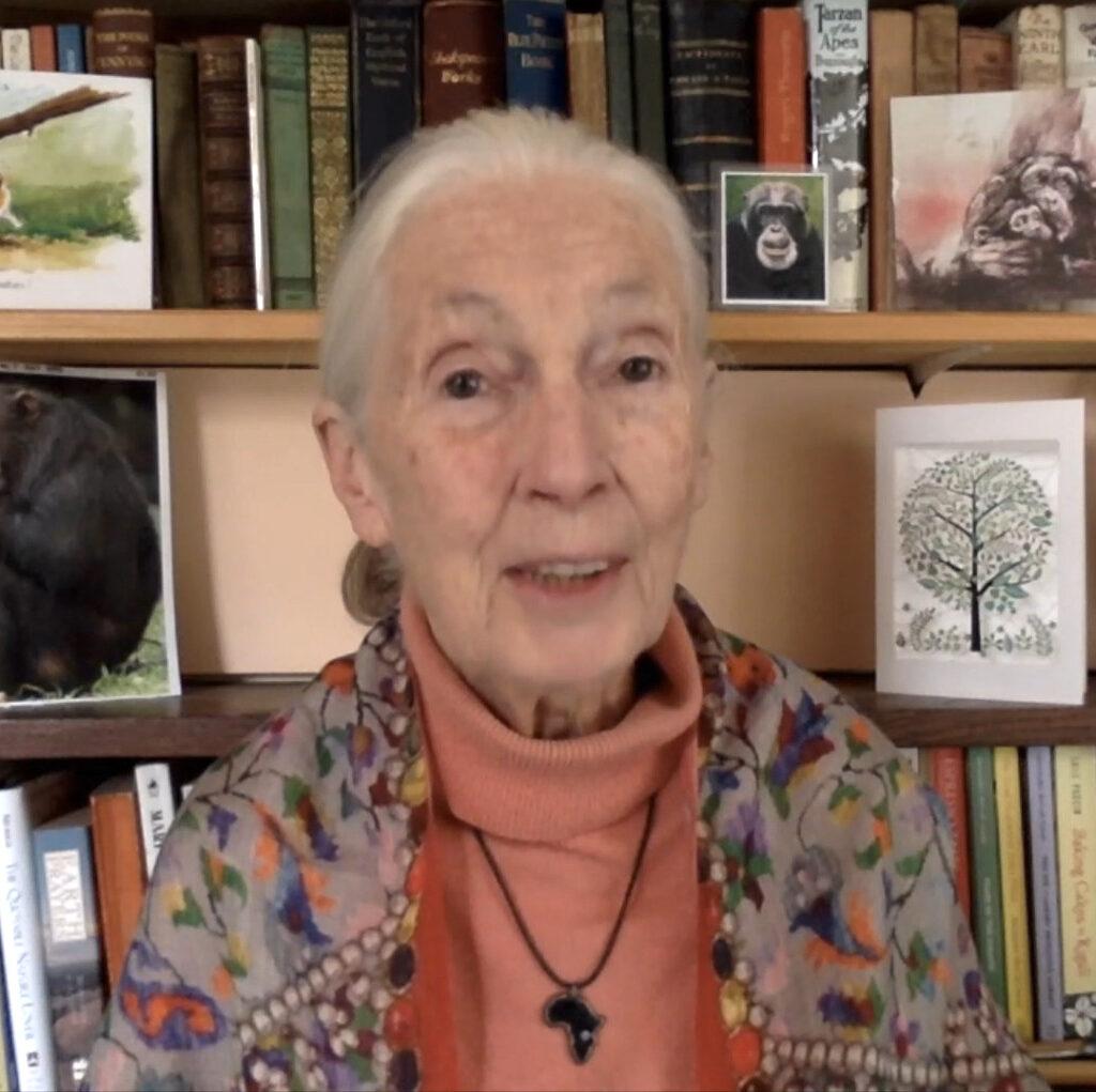 Grootouders apetrots op Jane Goodall als 100ste ambassadeur
