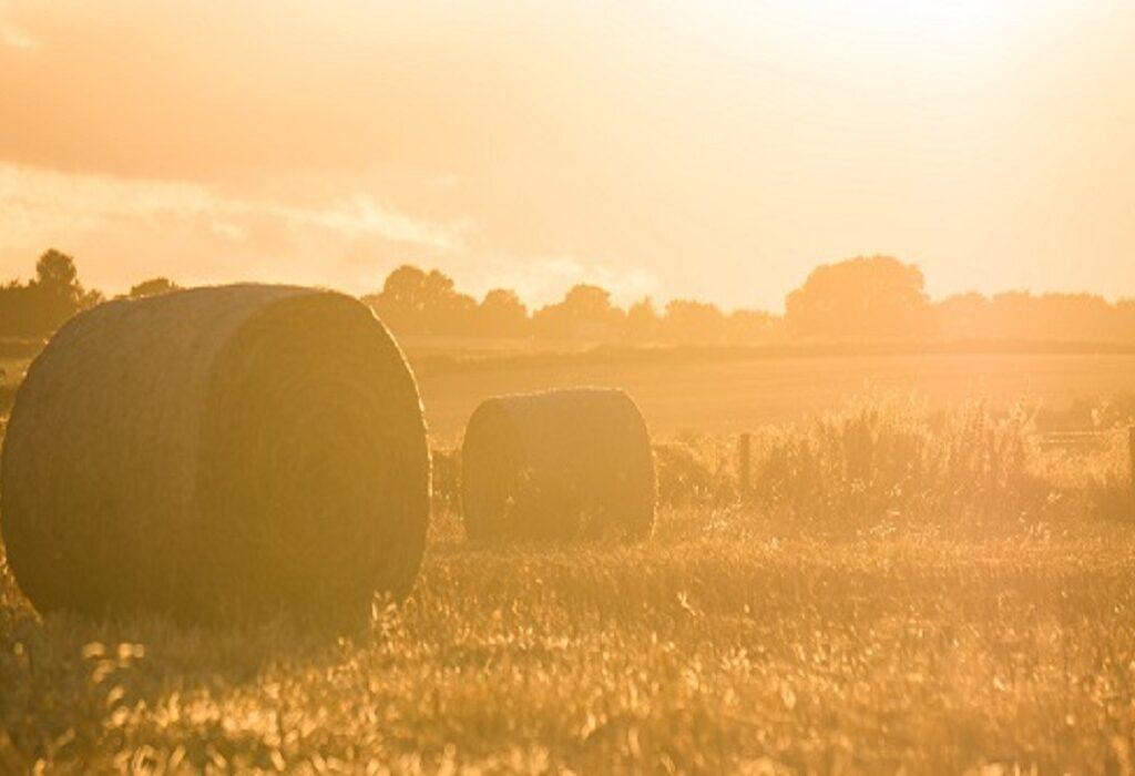 Dringende oproep – Laatste  kans voor groener EU landbouwbeleid – Teken oproep Greenpeace