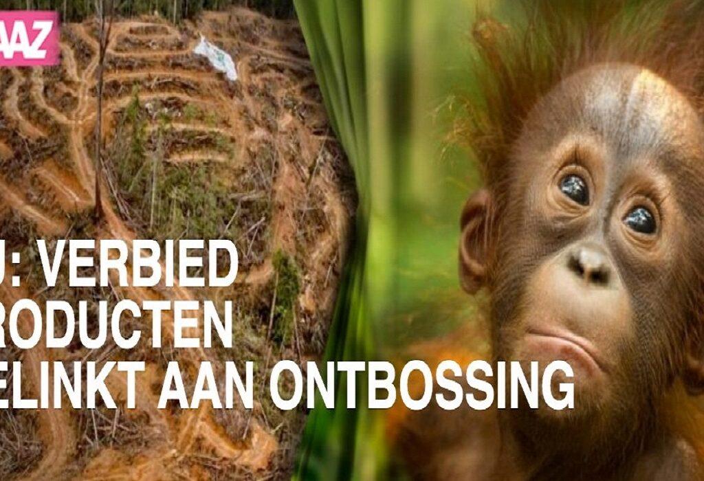Stem nu voor het EU wetsvoorstel dat bossen redt