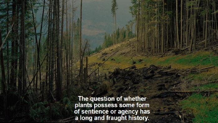 Artikel ecosysteem bossen