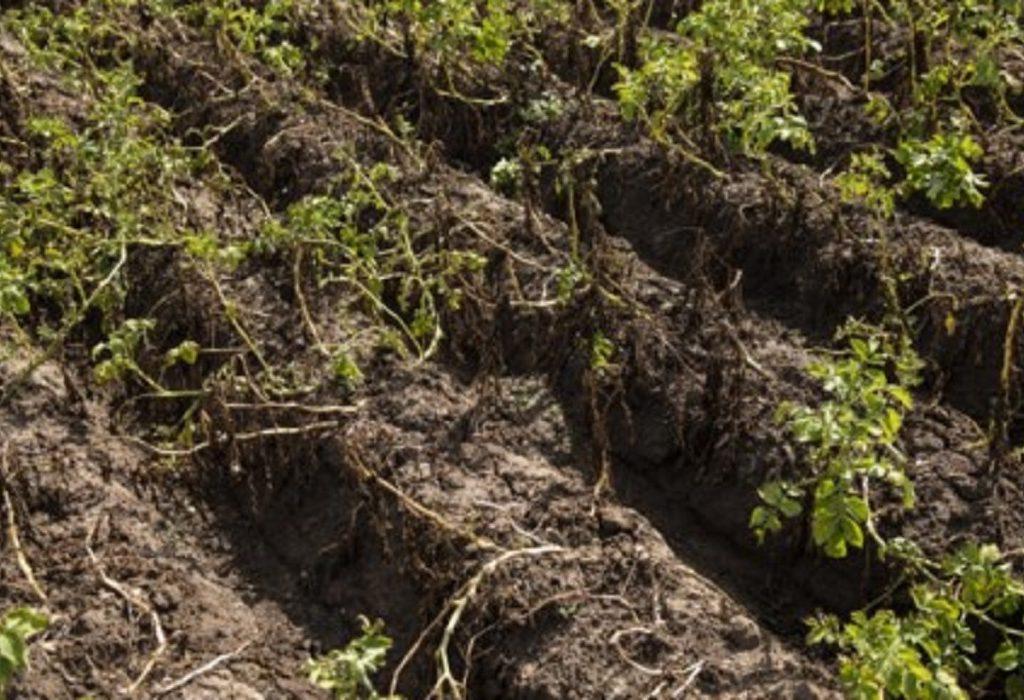 We verkwanselen het kapitaal van onze bodems in ijltempo